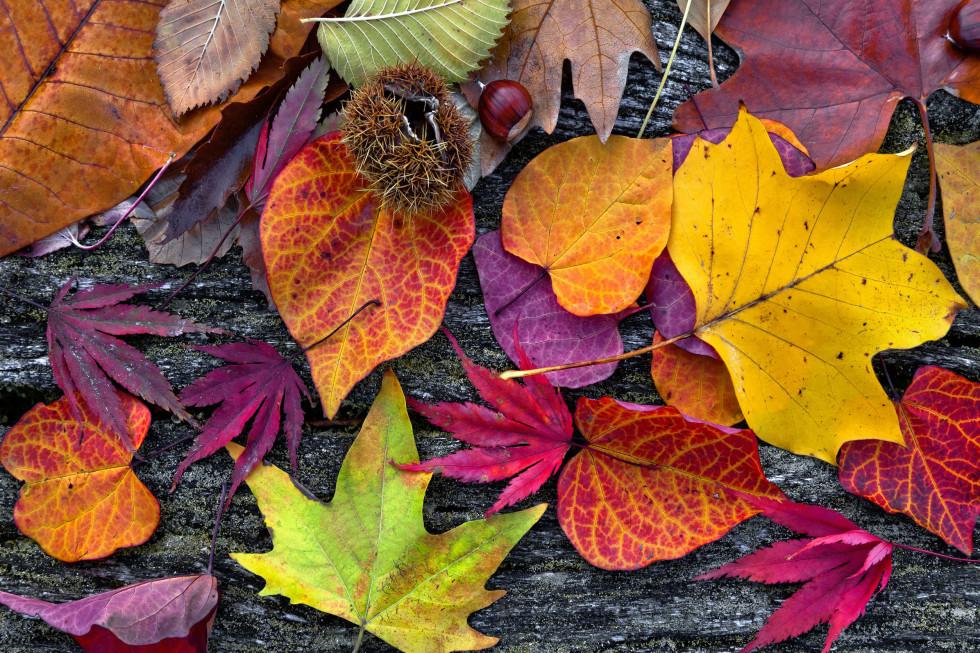 Listopad je náš! - Blog - Manna. Pociťte ten rozdíl na pokožce!